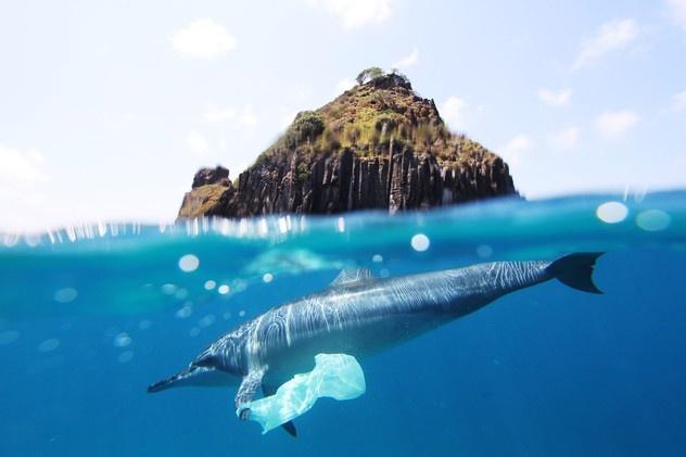 delfines mueren por ingerir bolsas